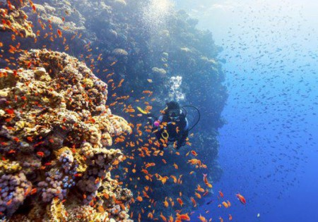 TOURISM IN EGYPT:  THE ITALIANS RETURN TO THE RED SEA <br> HOLIDAYS OR INCENTIVE TRIPS – EGYPT IS AT THE TOP AGAIN